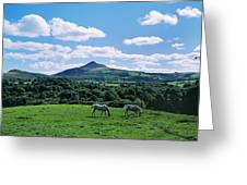 Two Horses Grazing In A Field Greeting Card
