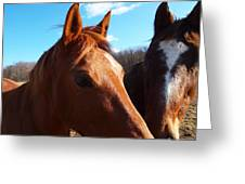 Two Horses In Love Greeting Card