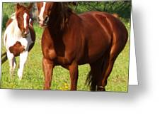 Two Horses In Summer Greeting Card