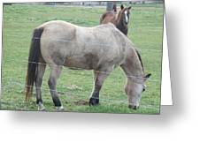 Two Horses Up Front Greeting Card