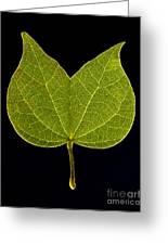 Two Lobed Leaf Greeting Card