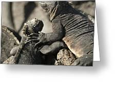 Two Marine Iguanas Amblyrhynchus Greeting Card