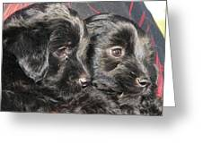 Two Matched Pups Greeting Card