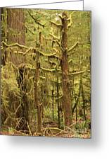 Waltzing In The Rainforest Greeting Card