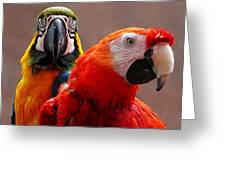 Two Parrots Closeup Greeting Card