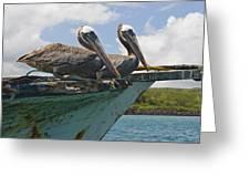 Two Pelicans Pelecanus Occidentalis On Greeting Card