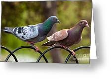 Two Pigeons Greeting Card