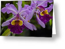 Two Pink Purple Orchids Greeting Card