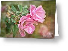 Two Pink Roses II Blank Greeting Card Greeting Card
