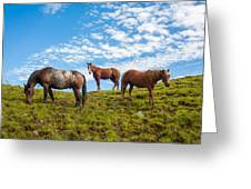Two Quarters And An Appaloosa Greeting Card