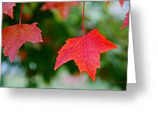 Two Red Maple Leaves Greeting Card