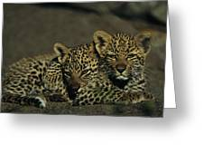 Two Sleepy Four-month-old Leopard Cubs Greeting Card