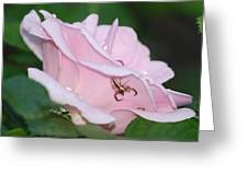 Two Spiders In A Rose Greeting Card