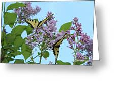 Two Swallowtails Greeting Card