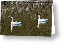 Two Swan Floating On A Pond  Greeting Card