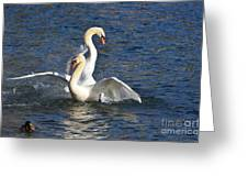 Two Swans Playing Greeting Card