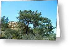 Two Torrey Pines Greeting Card