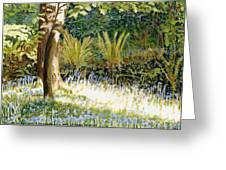 Sunlit Bluebells Llanina Ceredigion Greeting Card