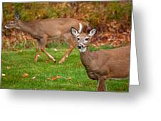 Two Visitors Greeting Card