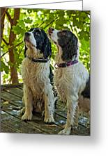 Two Wet Puppies Greeting Card