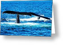 Two Whale Tails Greeting Card