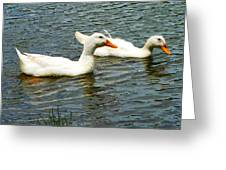 Two White Ducks Greeting Card