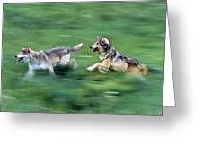 Two Wolves Running Through Meadow Greeting Card