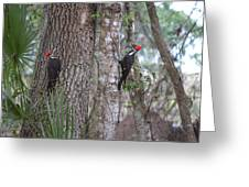 Two Woodpeckers Greeting Card