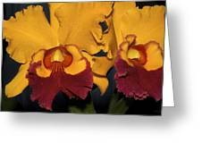 Two Yellow And Red Orchids Greeting Card