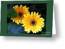 Two Yellow Dahlias Greeting Card