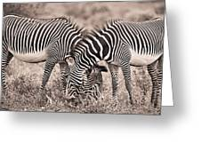 Two Zebras Grazing Together Kenya Greeting Card