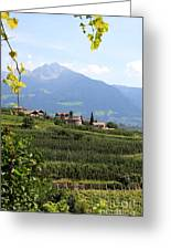 Tyrolean Alps And Vineyard Greeting Card