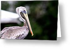 Ugly Beauty - Brown Pelican Greeting Card