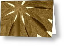 Umbrella In Sepia Greeting Card