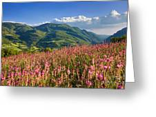 Umbria Greeting Card