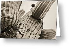 Under Saguaro Greeting Card