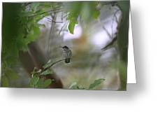 Under The Canopy Greeting Card
