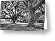 Under The Oaks Greeting Card