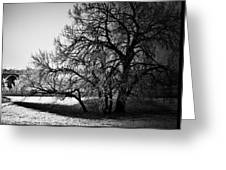 Under The Waiting Tree Greeting Card