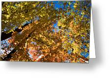 Underside Of Fall Greeting Card