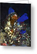 Underwater Bouquet Formed By Cluster Greeting Card