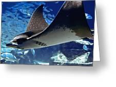 Underwater Flight Greeting Card