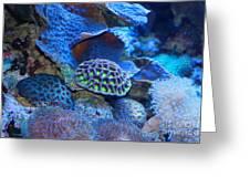 Underwater Paradise Greeting Card