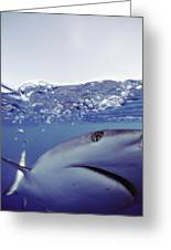 Underwater View Of Gray Reef Shark Greeting Card