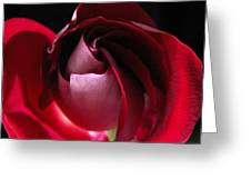 Unfolding Rose Greeting Card