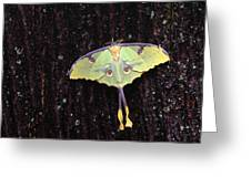 Unique Butterfly Resting On Tree Bark Greeting Card