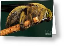 Unknown Wild Bee Greeting Card