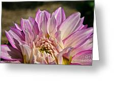 Unnamed Dahlia 3002 Greeting Card