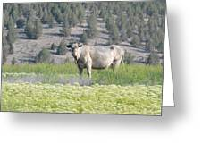 Unusual Colored Cow Greeting Card