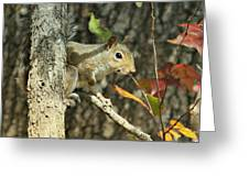Up A Tree Greeting Card by Debbie Sikes